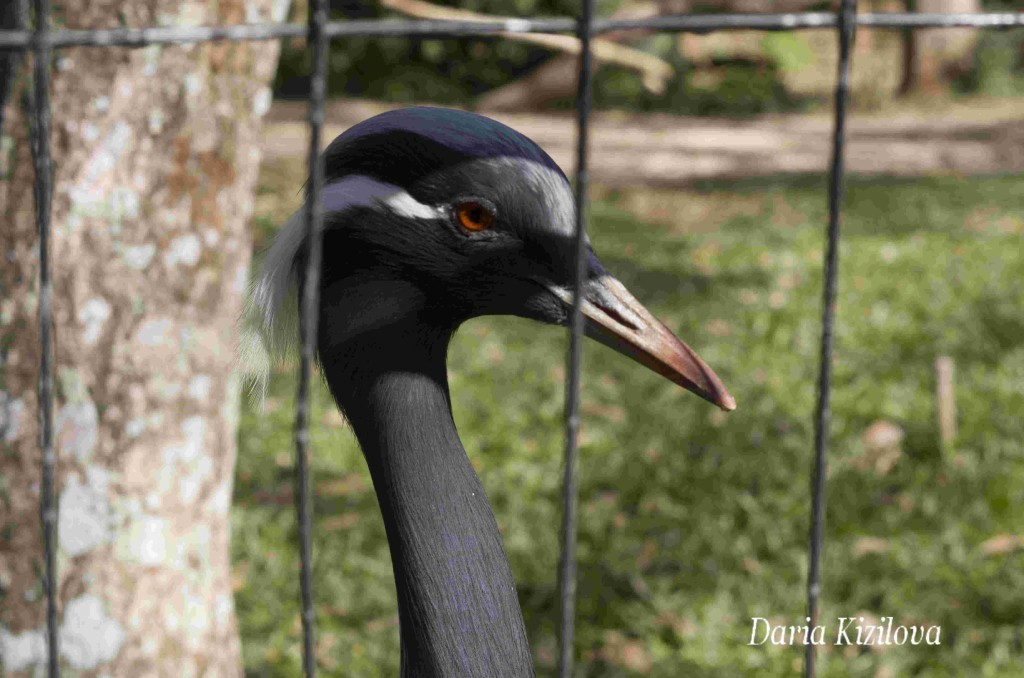 Aves en Brazil