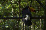 Птицы Бразилии