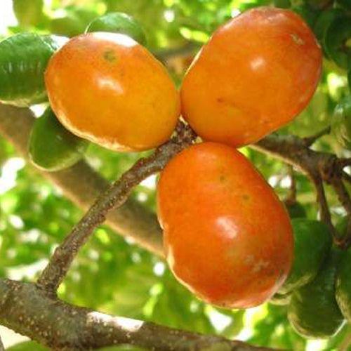 Fruits of Brazil