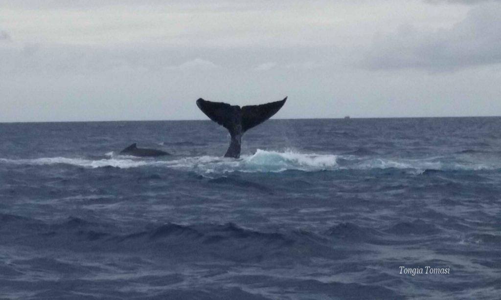 Китовый Сезон