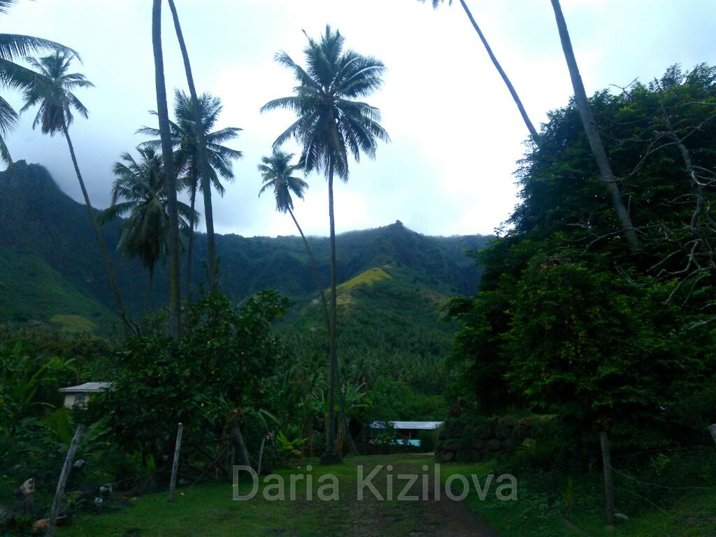 Marquesas Islands Jungle