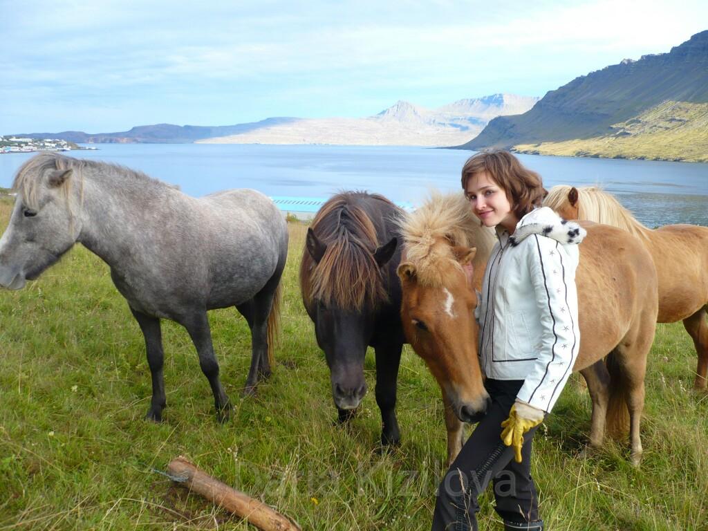 Исландские пони