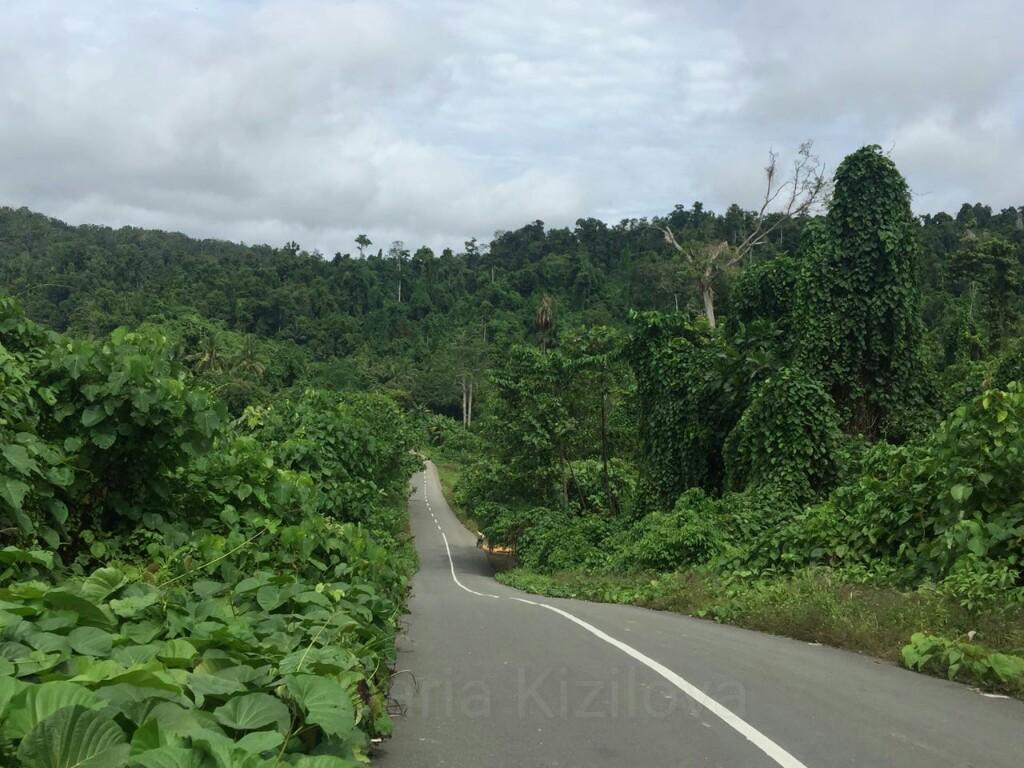 Jungle of Papua