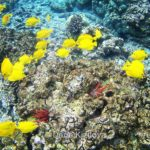 Подводный Мир Гаваев