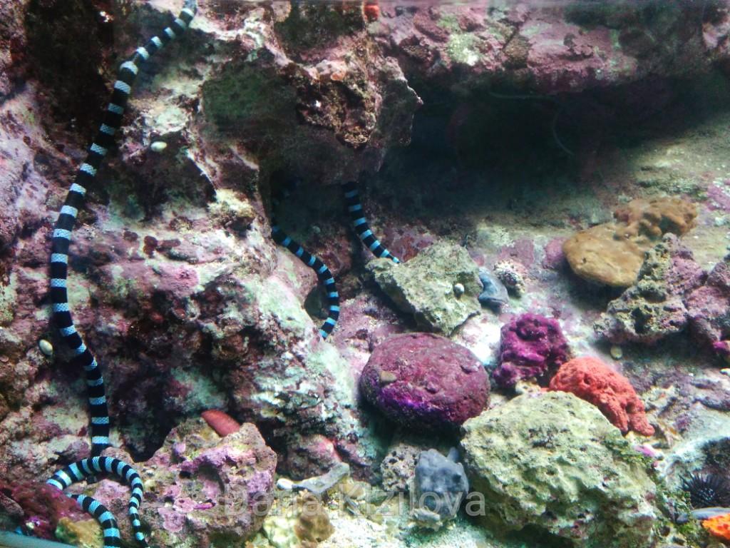 Snake fish