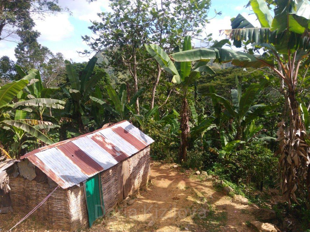 Джунгли Гаити